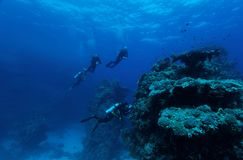 Visibilidade extrema - recife do St John, Egipto Foto de Stock