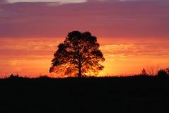 Visibilité de lever de soleil Image stock