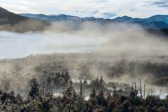 Visibilité directe Alerces, Patagonia, Argentine de parc national Photo libre de droits