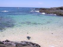 Visibilité directe Santos 01 d'iguane d'Isla Photo stock