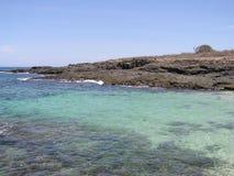 Visibilité directe Santos 02 d'iguane d'Isla Images stock