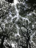 Trees, bottom-up view. stock images