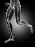 Visible leg bones Stock Images