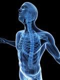 Visible skeleton Royalty Free Stock Photo