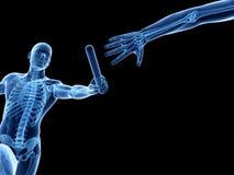 Visible skeleton Royalty Free Stock Image
