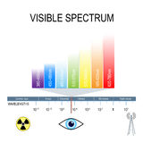 Visible spectrum and invisible light. Human eyes are only sensitive to the range that is between wavelength 780 nanometers and 380 nanometers in length royalty free illustration