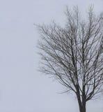 Visiblity zero in groppo della neve con l'albero in priorità alta immagini stock libere da diritti