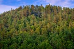 Visión encima de la colina del bosque en Siberia Fotos de archivo