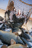Visindustrie Stock Fotografie