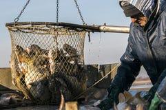 Visindustrie Stock Afbeelding
