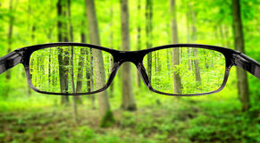 Vision. Clear forest in glasses on the background of blurred forest Stock Photography