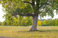 A vision in bright autumn colors of nature Royalty Free Stock Photo