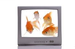 vision för fisk o Arkivbild