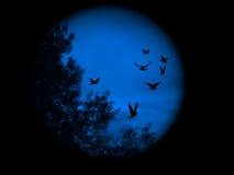 Visione blu del mondo Fotografia Stock