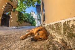 Visione della via del cane Fotografie Stock