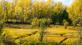 Visionen av hösten Royaltyfri Bild