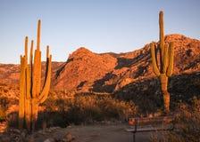 Visionnement Catalina Photo libre de droits