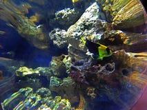 Visionnement d'un poisson Images libres de droits