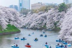 Visionnement de fleurs de cerisier en le bateau, Tokyo, Japon photos libres de droits