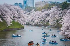 Visionnement de fleurs de cerisier en le bateau, Tokyo, Japon images stock