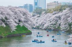 Visionnement de fleurs de cerisier en le bateau, Tokyo, Japon photographie stock