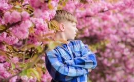 Visit sakura garden. Cute child enjoy warm spring day. Boy teen posing near sakura. Child on pink flowers of sakura tree. Background. Botany concept. Guy royalty free stock photos