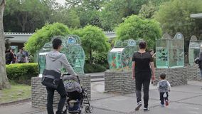 Visit the Shanghai Zoo. stock video footage