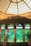 Visit to aquarium Royalty Free Stock Image