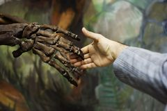A visit to the natural museum: hand shake over time Royalty Free Stock Photo