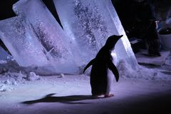 Visita alla bio- cupola di Montreal - pinguini fotografia stock