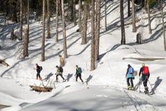 Visita alpina na floresta Imagens de Stock Royalty Free
