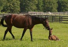 Visita de la mañana a la granja del caballo fotos de archivo libres de regalías