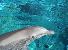 Visita del delfín Foto de archivo