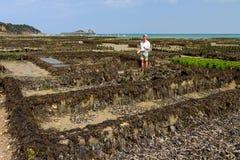 Visita dell'ostrica Immagine Stock Libera da Diritti