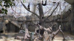 Visitantes al parque zoológico en el pabellón de los monos almacen de video