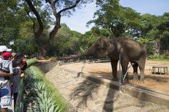 Visitantes al parque zoológico que alimenta un elefante en una jaula HO CHI MINH CITY, VIETNAM Fotos de archivo
