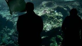 Visitantes en el acuario almacen de video