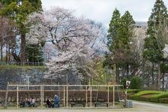 Visitantes no parque de Iwate (parque do local do castelo de Morioka) Imagem de Stock