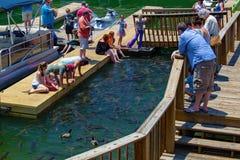 Visitantes que alimentam peixes da carpa fotografia de stock