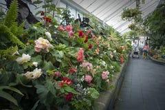 Visitantes que inspecionam as plantas da begônia crescidas em Begonia House em Wellington, Nova Zelândia imagens de stock royalty free