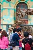 Visitantes que tocam no grraffe no jardim zoológico Foto de Stock