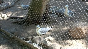 Visitar el parque zoológico