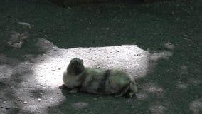 Visitar el parque zoológico metrajes