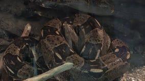 Visitar el parque zoológico almacen de video