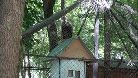 Visitar el parque zoológico almacen de metraje de vídeo
