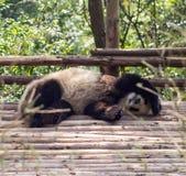 Visitar las pandas del parque Foto de archivo