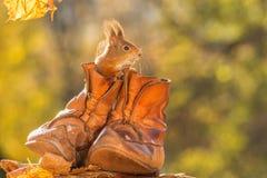 Visite de chaussure Photographie stock libre de droits