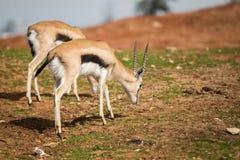 Visite de matin chez Safari Ramat Gan photo stock