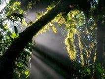 Visite de Trekkin dans Monteverde photo stock