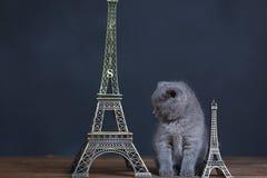 Visite proche Eiffel de portrait de chatons, d'isolement Image stock